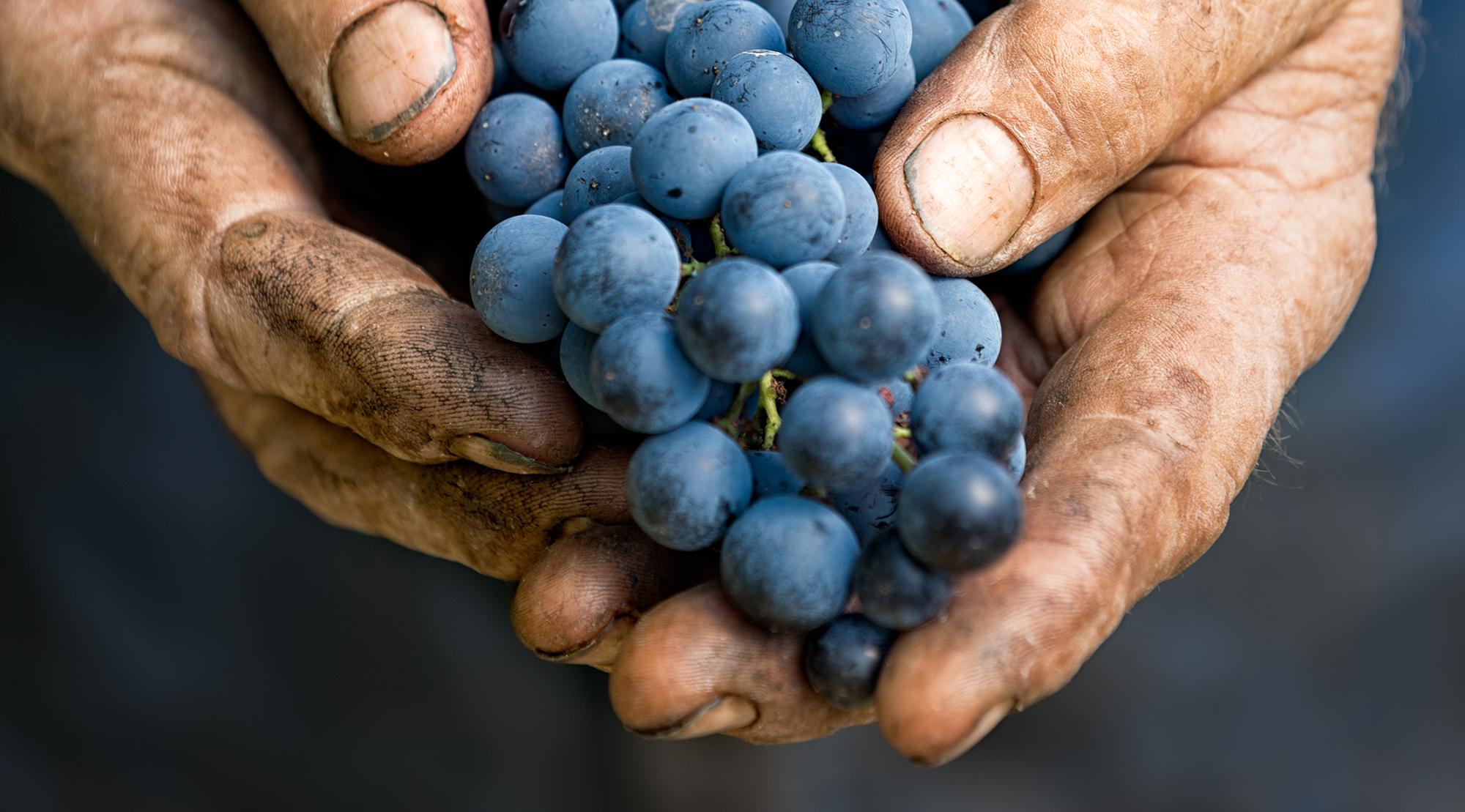 Yakima Valley Organic Vineyards