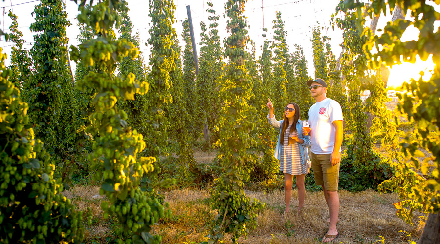 Yakima Valley Breweries
