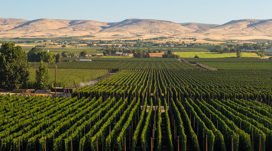 Get Away to Yakima Valley Hop Country