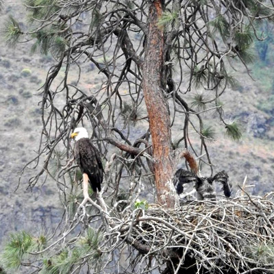 Yakima River Canyon Wildlife Viewing